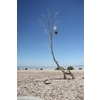 Installation at Salton Sea, CA